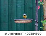 Blue Tit Perched On A Feed Tra...