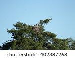 Osprey Nest. The Osprey Nest...