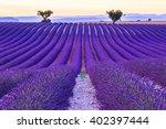 lavender field summer sunset... | Shutterstock . vector #402397444