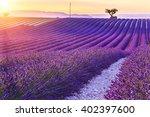 beautiful sunset lavender field ... | Shutterstock . vector #402397600