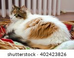 Stock photo cat laying in the basket with radiator background 402423826
