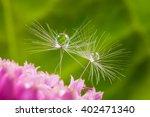 Dandelion Puff  Leaf  Drop ...