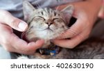 Stock photo child playing with cat at home 402630190