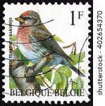 Small photo of CROATIA ZAGREB, 21 FEBRUARY 2016: a stamp printed in the Belgium shows Common Redpoll, Acanthis Flammea, Bird, circa 1992