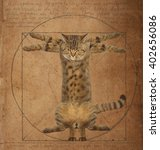 A Cat Looks Like The Vitruvian...