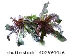 wild bitter herbs | Shutterstock . vector #402694456