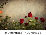 Red Rose Bushes Next To The...