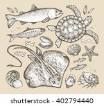Sea Animals. Hand Drawn...