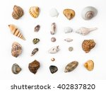Seashells  White Background