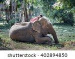 Stock photo the girls were sleep on the back of the elephant elephant village thailand 402894850