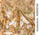combines a field of soybeans | Shutterstock . vector #403005760