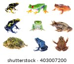 Frog Compilation. Red Eye Tree...