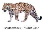 Jaguar Leisurely Strolls....