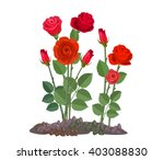 Stock vector flowers growing in the garden rose bush isolated on white background 403088830