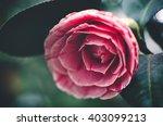 lush green fresh blossoming... | Shutterstock . vector #403099213