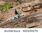 gila | Shutterstock . vector #403104370