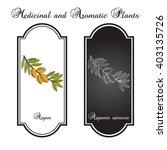 argan  argania spinosa. hand... | Shutterstock .eps vector #403135726