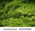 green leaves texture | Shutterstock . vector #403194898