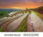 Twilight On Rice Fields For...