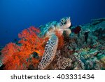Sea Turtle And Sea Fan