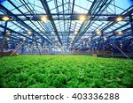 Small photo of agribusiness greenhouse seedling spring