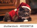 grey funny kitty  cute cat...   Shutterstock . vector #403338718