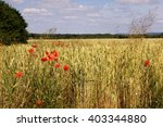Wheat Field With Poppy Blossoms