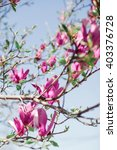 pink magnolia flowers outdoors... | Shutterstock . vector #403376728