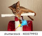 Stock photo cat playing with toy feathered pole 403379953