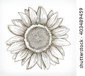 sunflower sketch  hand drawing  ... | Shutterstock .eps vector #403489459