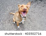 Stock photo funny brown dog sitting on asphalt 403502716