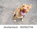 Stock photo funny brown dog sitting on asphalt 403502746