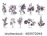 10 most poisonous plants... | Shutterstock . vector #403572043