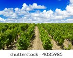 Vineyard in Bordeaux - stock photo