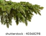 Green fir branch on the white background - stock photo