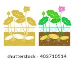 lotus root with leaves and...   Shutterstock .eps vector #403710514
