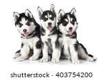 Stock photo two months old siberian husky puppies isolated on white background 403754200