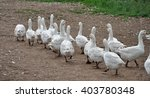 geese | Shutterstock . vector #403780348
