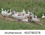 geese | Shutterstock . vector #403780378
