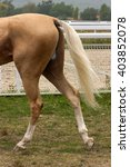 The Tail Of A Akhal Teke Horse...