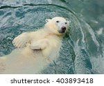 Polar Bear Swims In The Water...