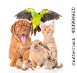 Stock photo group of pets together in front view isolated on white background 403904620