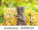 Stock photo little kitten in the garden with flowers on background 403989223