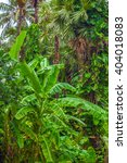 tropical landscape.  | Shutterstock . vector #404018083