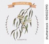 color eucalyptus globulus aka...   Shutterstock .eps vector #404032990