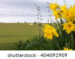cows in distant field with... | Shutterstock . vector #404092909