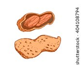 hand drawn peanut isolated on... | Shutterstock .eps vector #404108794
