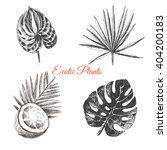 vector exotic hand drawn palm... | Shutterstock .eps vector #404200183