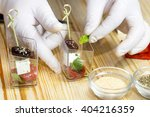 cook prepares canapes in the... | Shutterstock . vector #404216359