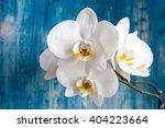 white orchid flower on blue... | Shutterstock . vector #404223664